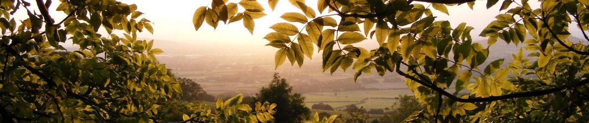 Leadon Vale